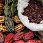 _cocoa-beans different colour